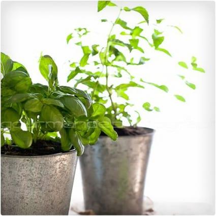 Make Your Own Herb Garden
