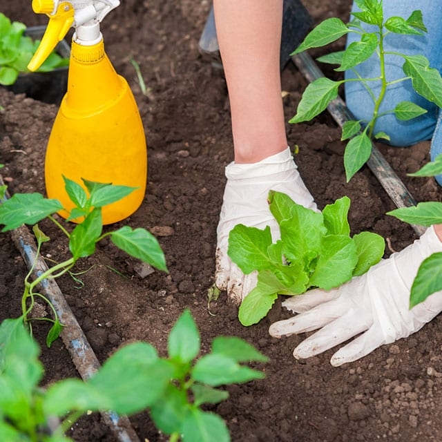 Use these homemade weed killers to get rid of the weeds in your garden naturally...