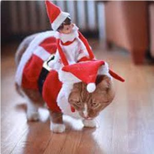 Elf Riding a Cat