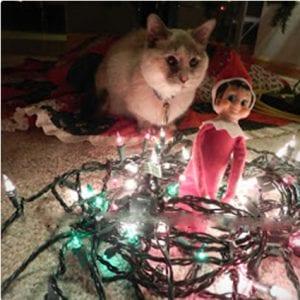 Lights Elf
