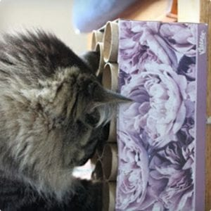 Cat Activity Toy Made Using Toilet Paper Rolls