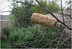 Easy Toilet Paper Roll Bird Feeder