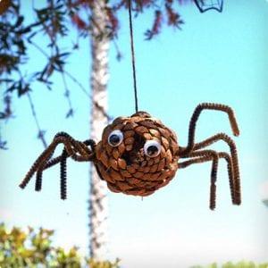 Pine Cone Spiders