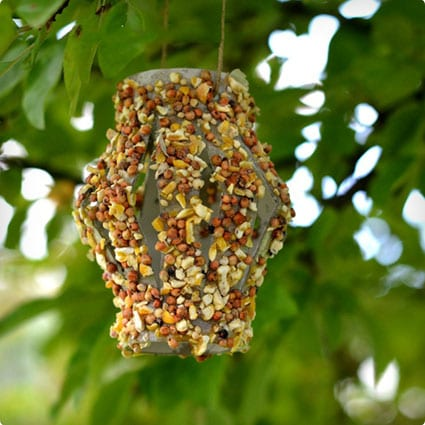 Bird Feeder Made From Old TP Roll