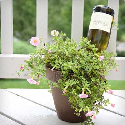 Plant Watering Device Made From Wine Bottles