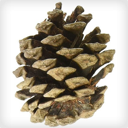 Natural Red Pine Cones 7 Ounces/Pkg