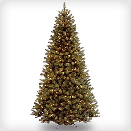 North Valley Spruce Tree, 550 Clear Lights